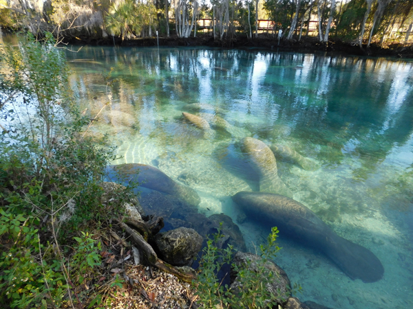 From Mouse to Manatee in Florida