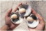 Scallop Safari in Crystal River
